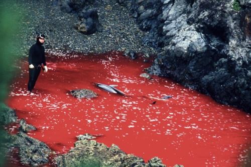 dolphin_slaughter_taiji_japan_the_cove_brooke_mcdonald_14